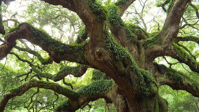 1474363630-8565-Oak-Society.-Source-640x359