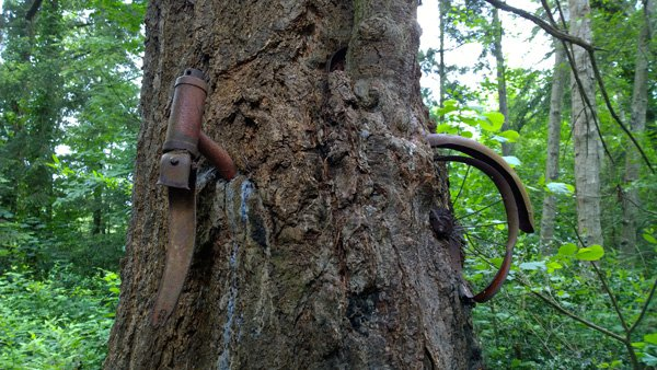 Icycle Tree Vashon Island Real Story Boy Left Bike