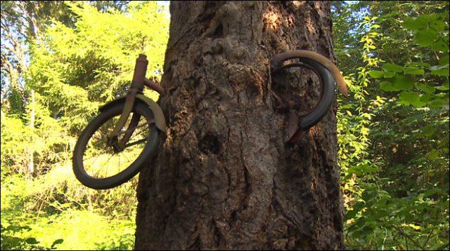 1474708992-6534-131114-bike-in-a-tree-660