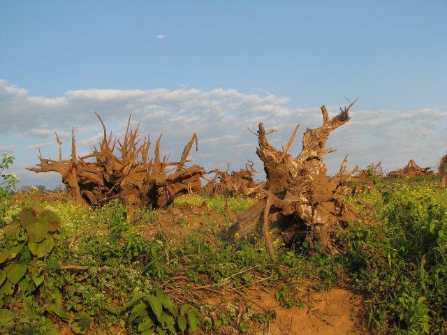 Deforestation around Pakke Tiger Reserve, India - Image source