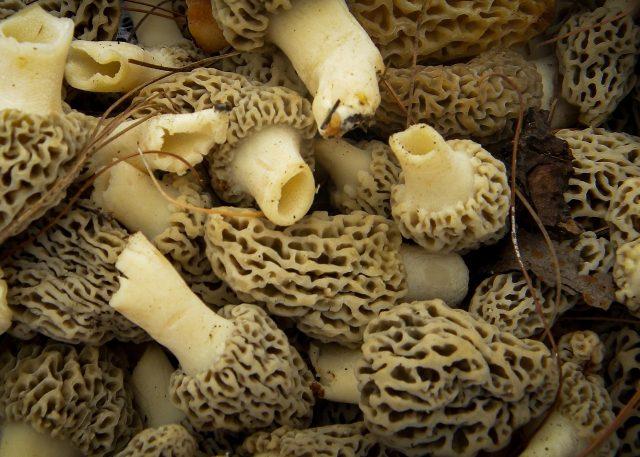 mushrooms-1053367_1280