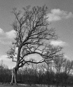 1475660373-8850-nk-tree-Lucas-Ohio---cropped