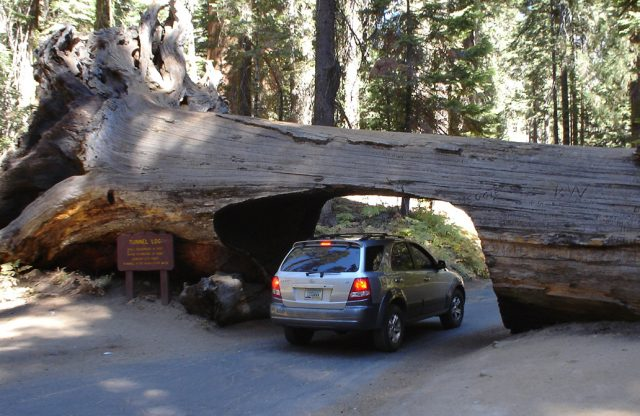 driving-underneath-a-sequoia-1361142