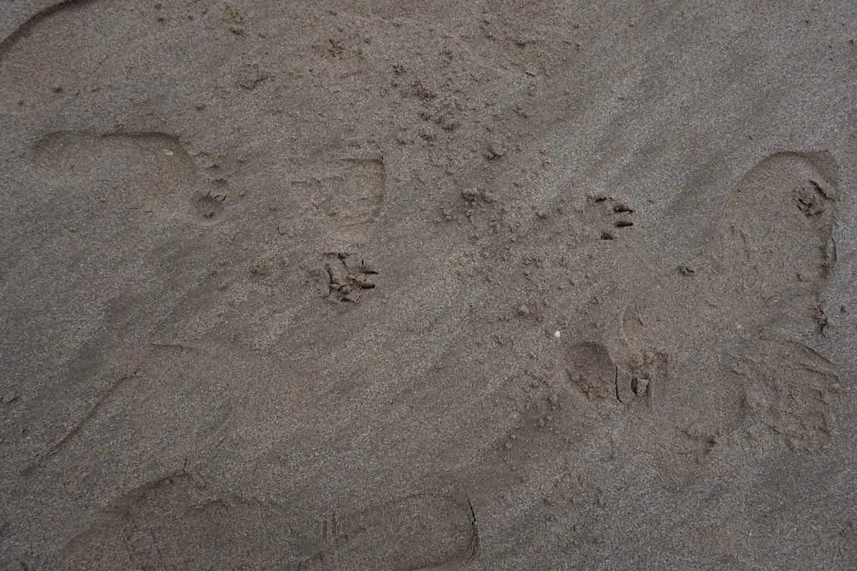 fox_track