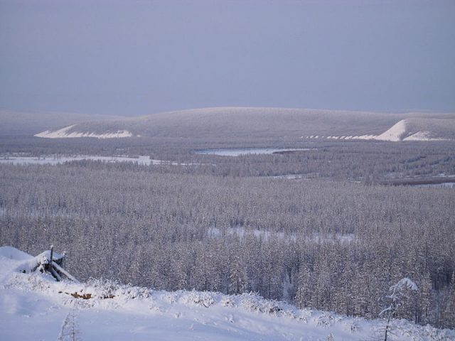 The taiga in the river valley near Verkhoyansk, Russia