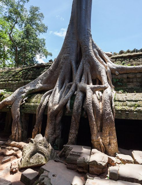 Roots of a spung running along the gallery of the second enclosure. Diego Delso/source