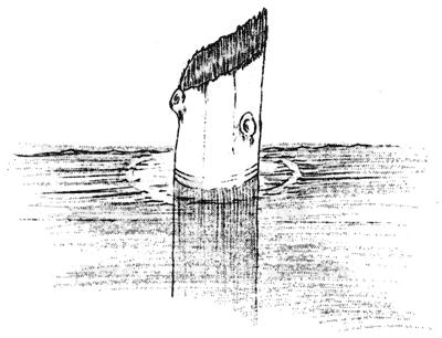 A sketch of the Old Man of the Lake published in 1938Source