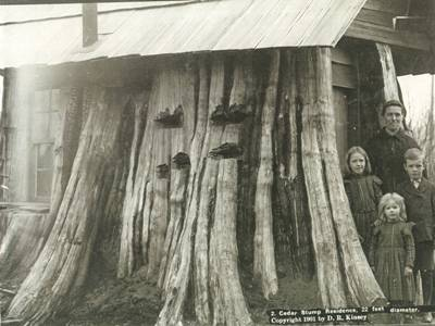 Stump residence. People would hollow out the stump of a cedar tree and make it their home until they could build a proper house. This stump was 22 feet in diameter.