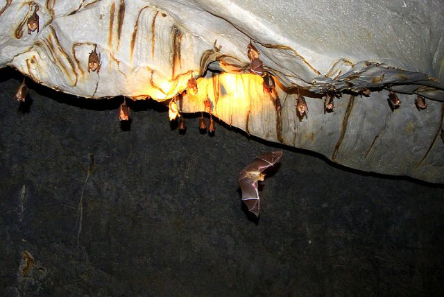 Bats hanging in the cave Photo Credit