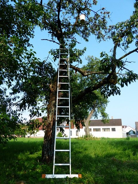 fruit picking ladder