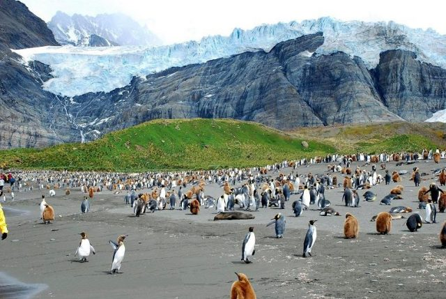 South Georgia glacier and penguin colony. Photo credit