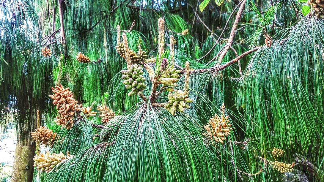how to treat pine for outdoor use