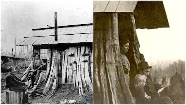 Stump Houses Really Were A Thing Outdoor Revival