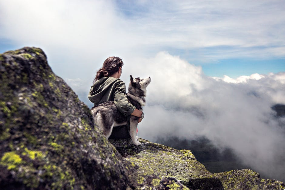 Your dog can make the perfect companion on a hiking trip