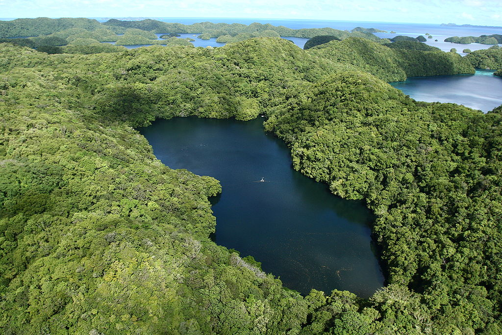 Jellyfish Lake on Eil Malk Island, Palau. Looking west-northwest with some coral and rock islets in the background. The Seventy Island Preserve is just visible in the upper left on the horizon. At the bottom of the image, in the lake, the numerous bright dots are the jellyfish/ Author: Lukas. CC BY 2.0