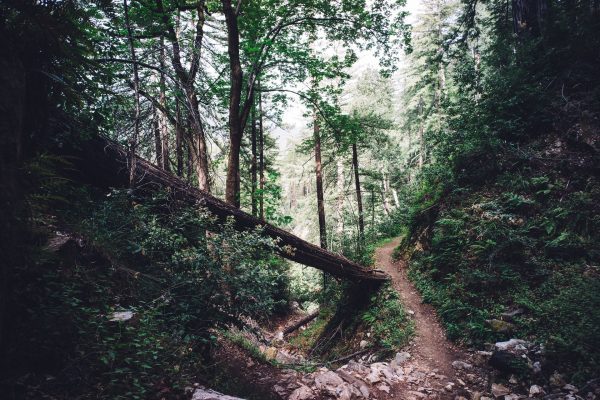 Hiking trail – stay on it