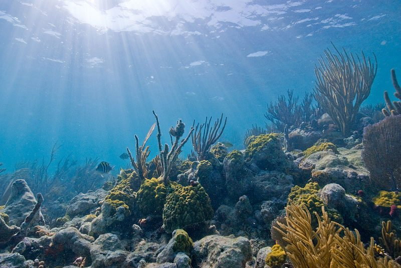 Underwater view of a coral reef at Biscayne National Park