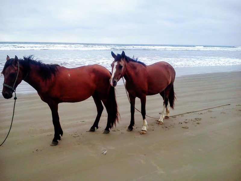 Try horseback riding on the beach for a unique adventure