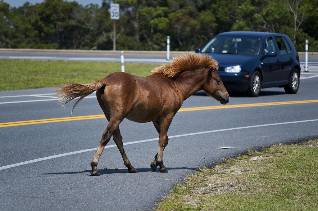 Assateague Island horses - Author: Notyourbroom - CC BY 3.0