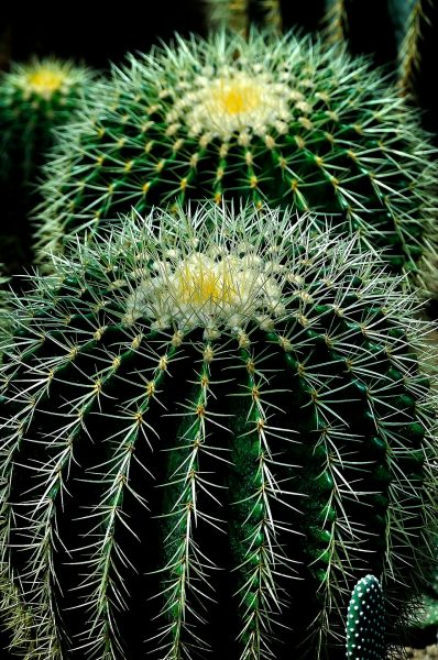 A cactus does not have much, if any, water inside