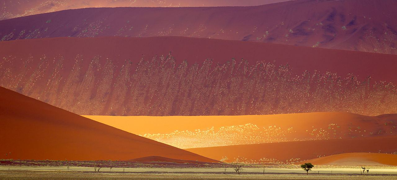 Sand dunes in the Namib-Naukluft National Park, Namibia. Older dunes are reddish and larger, newer dunes are yellow-brown. Author: Yathin S Krishnappa - CC BY-SA 3.0