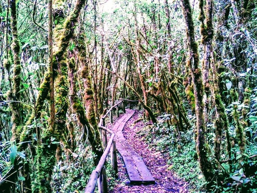 Uku Path