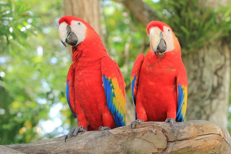 how to learn spanish quickly parrot bird