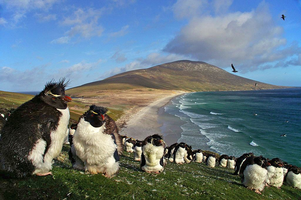 Saunders Island with Southern Rockhopper Penguins  - Author: Ben Tubby - CC BY 2.0