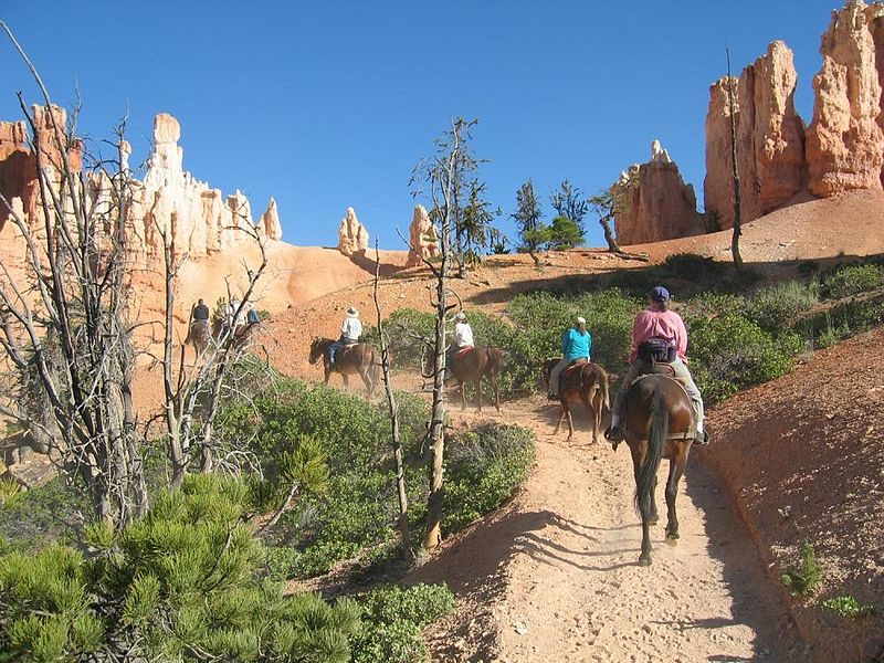 Horseback riders in the park