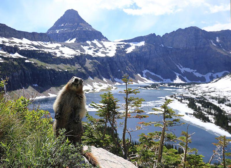 "Glacier National Park - Author:  ""Wikipedia / Tobias Klenze"" - CC BY-SA 4.0"
