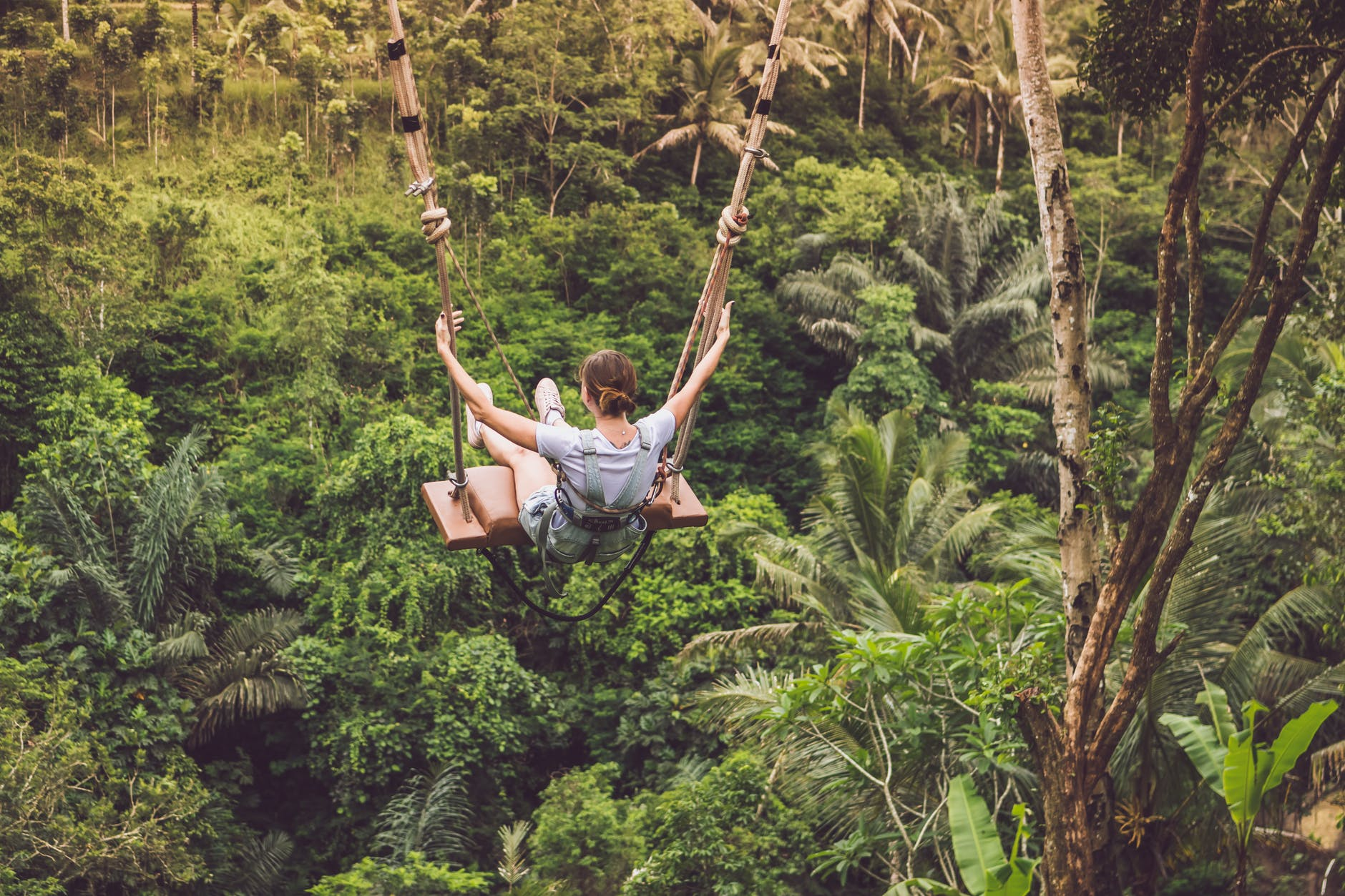 Swinging  in the rainforest