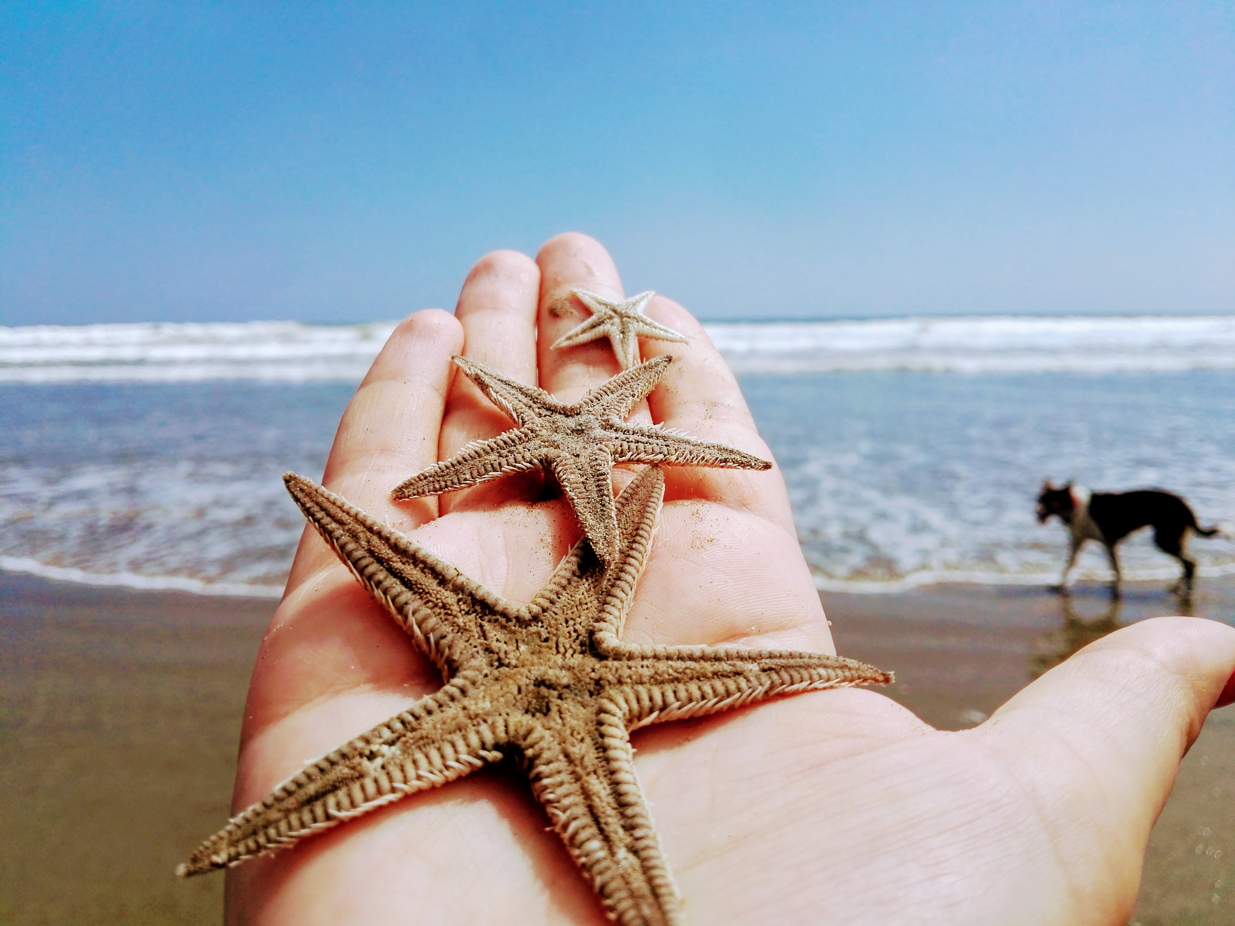 A starfish from the Pacific - Author: Stef Zisovska