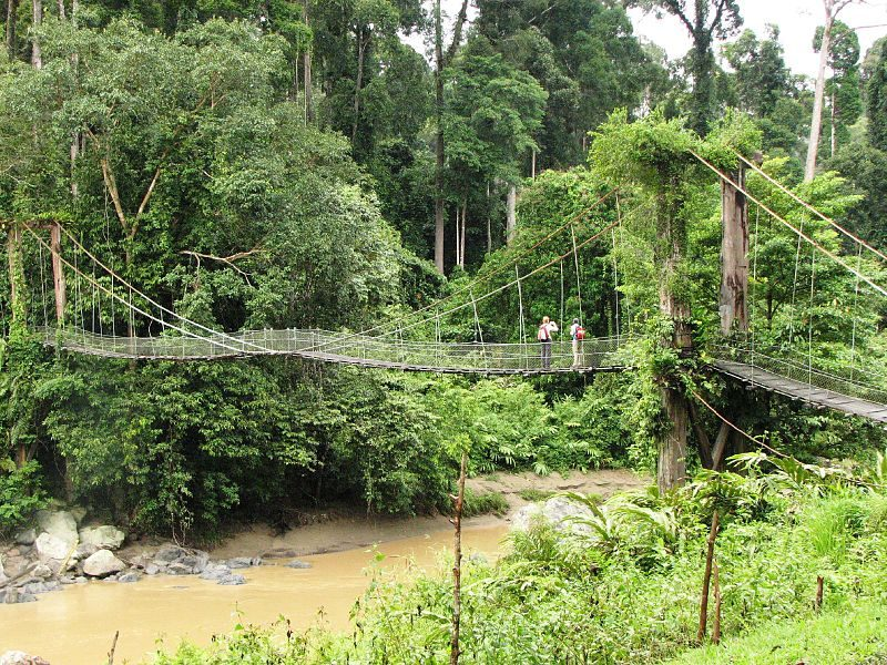 Footbridge to the tropical rainforest in Danum Valley – Author: Rob and Stephanie Levy – CC-BY 2.0