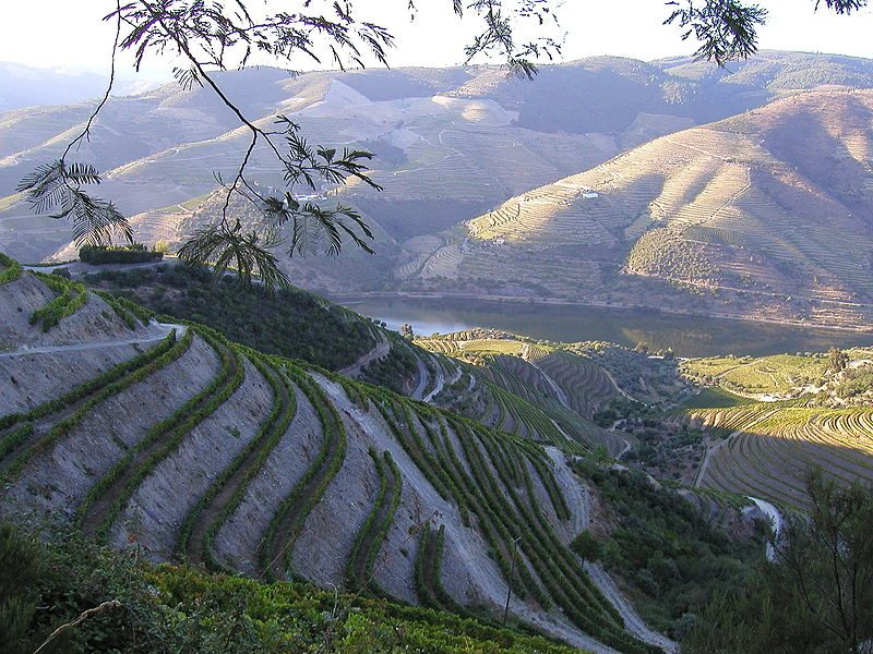 The grapevine terraces in the Douro Valley – Author: Bruno Rodrigues – CC BY-SA 3.0