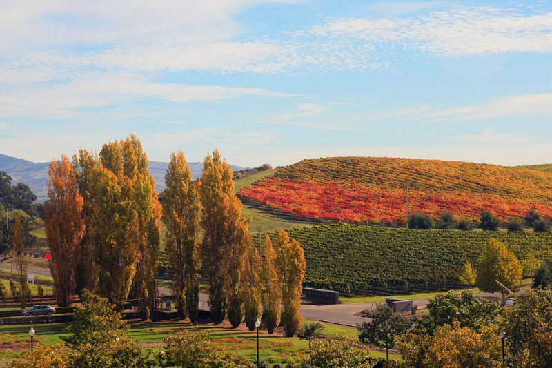 Fall in Napa Valley – Author: Brocken Inaglory – CC BY-SA 3.0