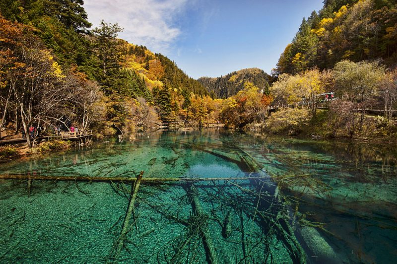 Five Flower Lake has a bottom that is crisscrossed by ancient fallen tree trunks – Chensiyuan – CC BY-SA 4.0
