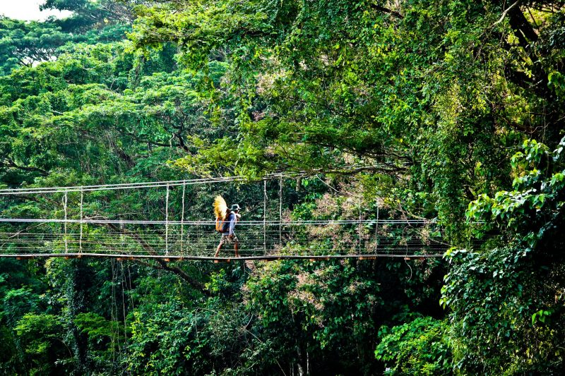 Jungle canopy walkway.