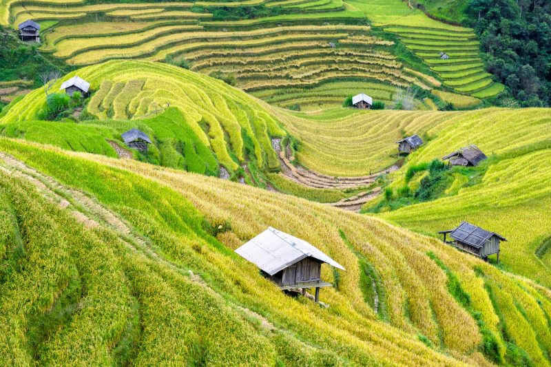 Visit the vast hills of Vietnam.