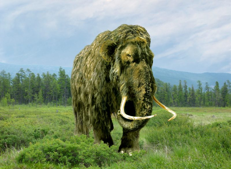 A created image of a mammoth in the summer in the forest northern zone.