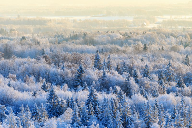 Siberian forest or taiga