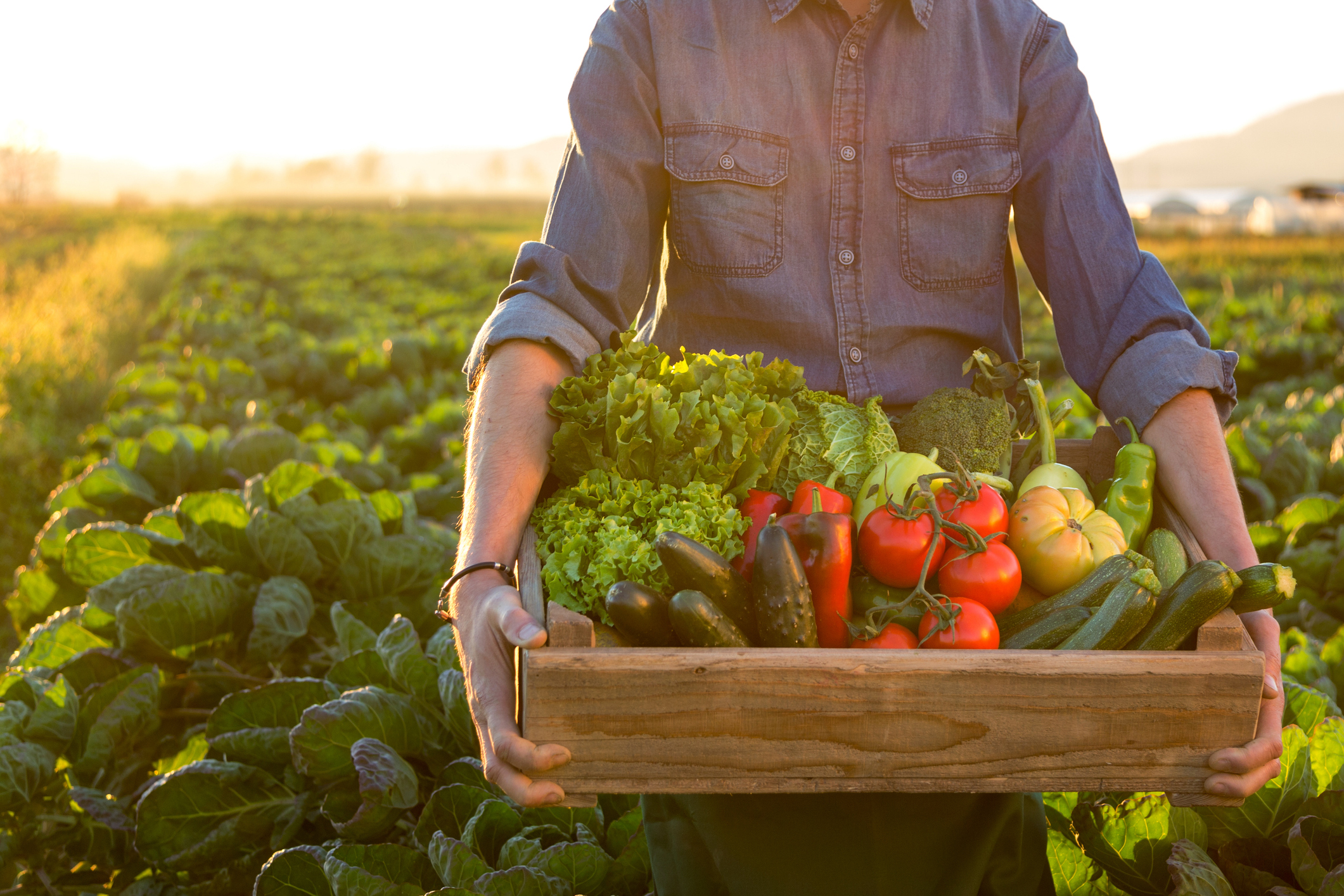 In a long-term survival situation, knowing how to grow your own food may be essential.