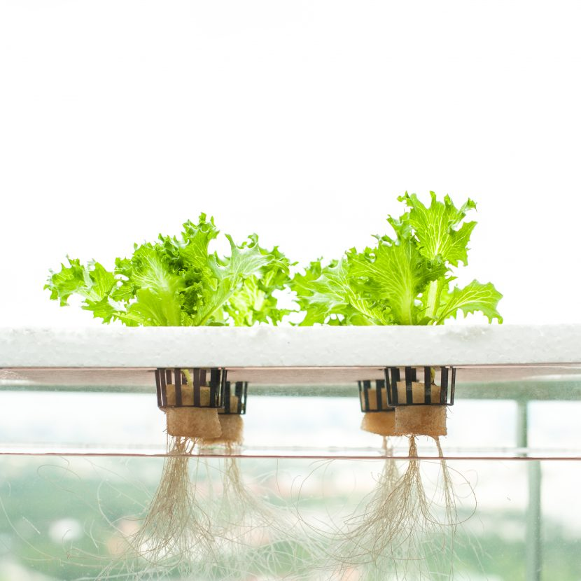 Steps For Creating A Hydroponic Survival Garden At Home