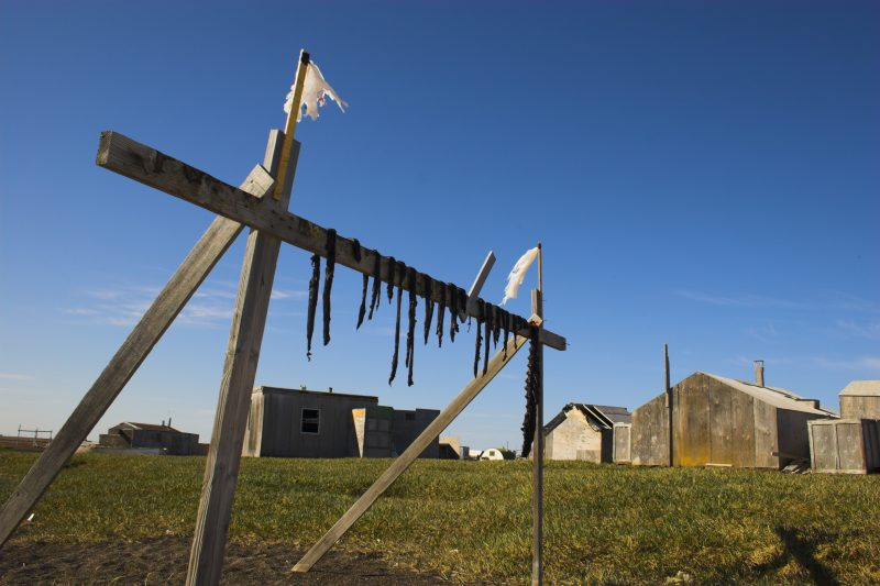 Traditional Inuit food, reindeer jerky, drying on a wooden rack in Barrow, Alaska, USA