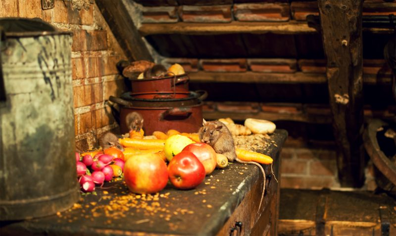 Don't use attics as food storage!