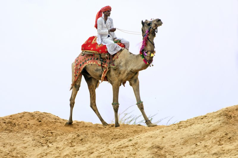 Pants aren't absolutely necessary for riding camels because the rider can ride on top of the hump