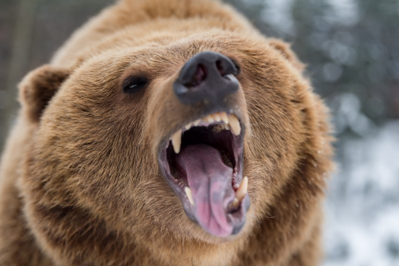 Being attacked by a bear is the stuff of many an outdoorsman's nightmares.
