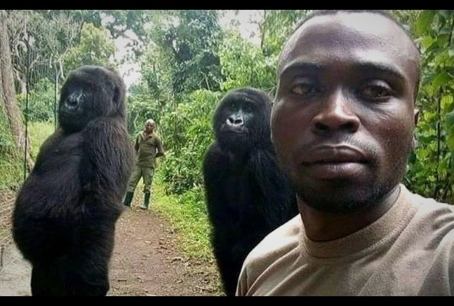 Just Beautiful Gorillas Pose For Amazing Selfie With The