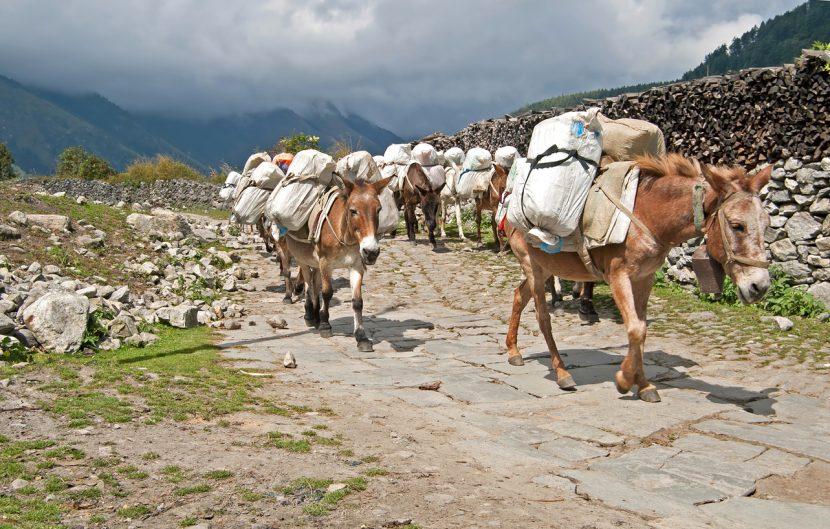 Donkey Trading Caravan in Nepal