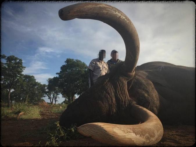 Safari Hunting - Man Kills Trophy Elephant in Zimbabwe  JWK Safaris/Facebook )