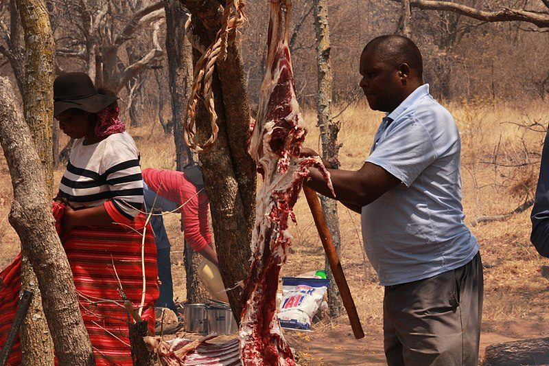 This means removing all the meat and fat from the inside of the hide, leaving behind only the skin itself – Mompati Dikunwane – CC BY-SA 4.0